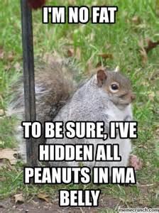 Dead Squirrel Meme - squirrel meme archive memes