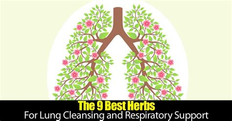 Running Detox Lungs by 9 Top Herbs For Lung Cleansing And Respiratory Support