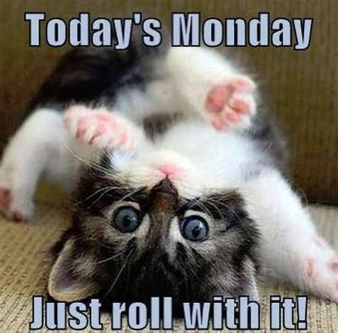 Monday Meme - happy monday cat www pixshark com images galleries