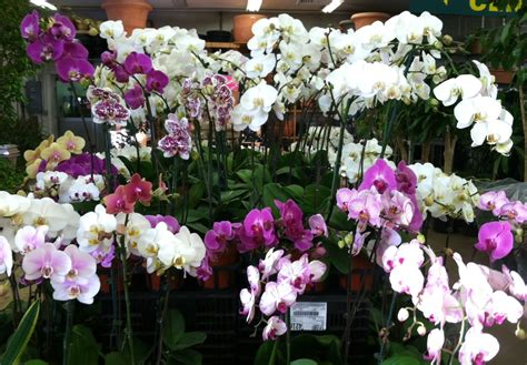 Indoor Garden Design Pictures Phalaenopsis Orchid Care Metropolitan Wholesale