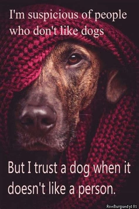 popular pinterest im suspicious  people  dont  dogs
