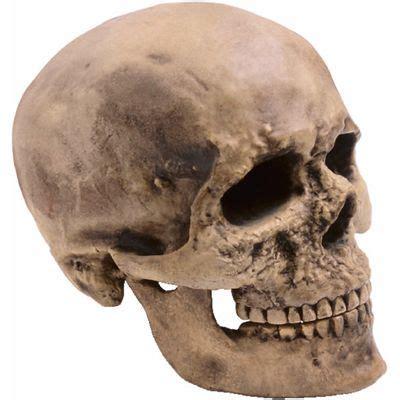 skull meaning of skull in longman dictionary of