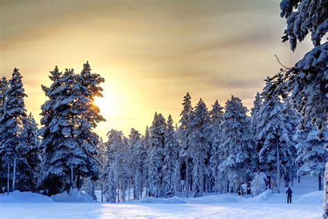 imagenes de flores invernales asombrosos ejemplos de fotograf 237 as con paisajes invernales