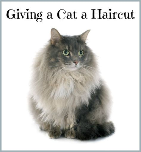 haircuts for long haired cats giving a cat a haircut thriftyfun