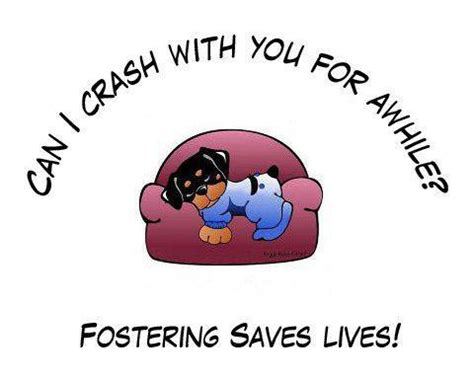 foster dogs become a foster parent
