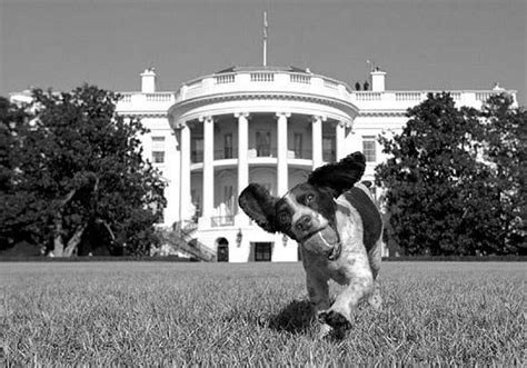 dogs in the white house history of quot first dogs quot at the white house