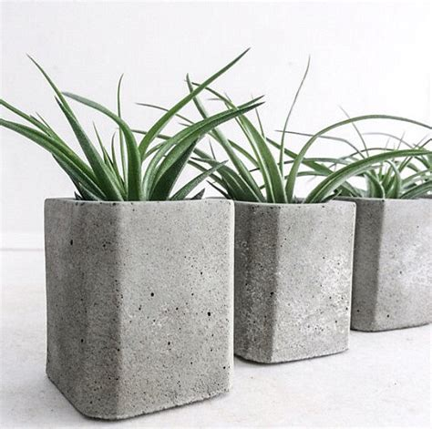 Air Plant Planters by Enhance Your Interior With The Tillandsia Air Plant