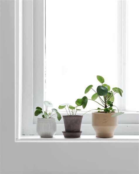 Indoor Windowsill Flowers Best 25 Window Sill Decor Ideas On Window