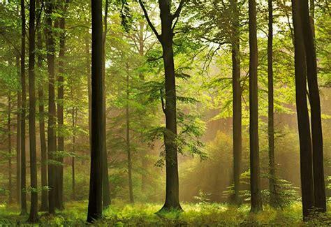 pemandangan hutan yang menakjubkan gambar pemandangan