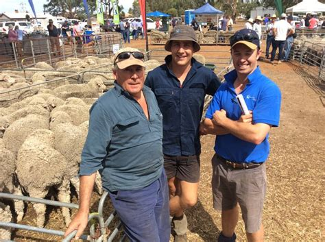 awn wool sire evaluation to test early selection queensland