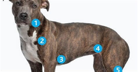 primer on lymphoma dawg business its your dogs health top veterinary articles of the week enlarged lymph nodes