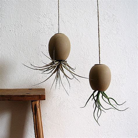 Air Plant Planters by Air Plant Pod Modern Indoor Pots And Planters By