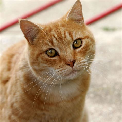 un gato a cat cat wiktionary