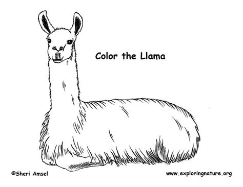 llama coloring pages coloring pages