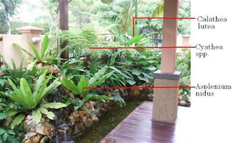 Growing Plant For Panduan Untuk Peduli Mengenal mengenal dan cara mengguna pokok landskap get to and how to use landscape plants