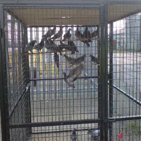 Pigeon Trap Door Design by Fourteenacre Pigeon Trap Mesh Doors