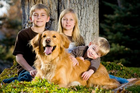 golden retrievers and children how to the right for your