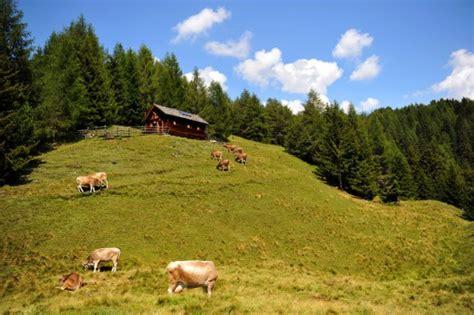 silvester selbstversorgerhütte kreuzwiesen h 252 tte almferien in l 252 sen s 252 dtirol