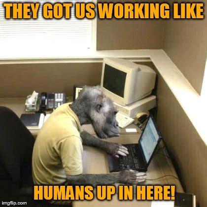 Sexy Monkey Meme - monkey business memes hot imgflip