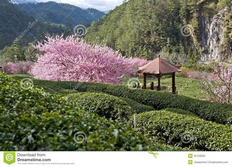 Garden Arbor Plans Beautiful Tea Garden In Taiwan Stock Image Image 35750933