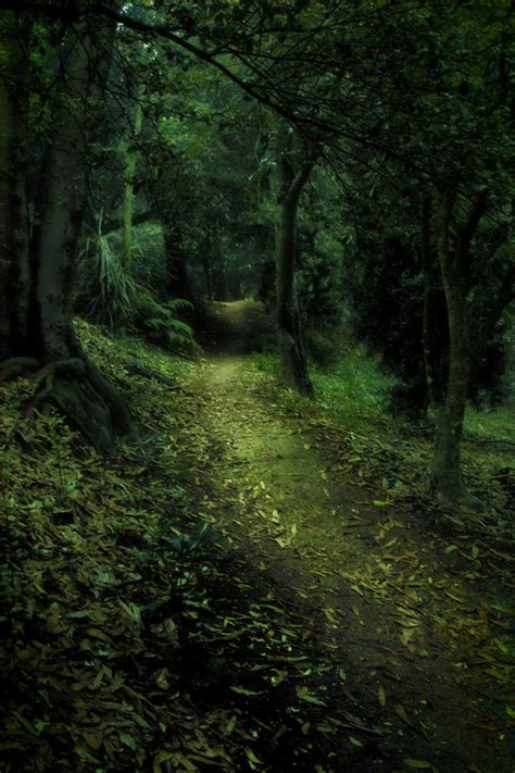 enchanted forest enchanted forest 4 by cathleentarawhiti new zeeland