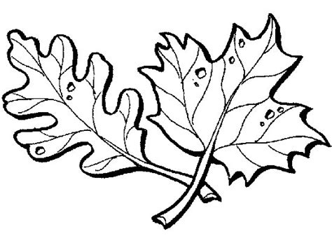 coloring book leaves leaf coloring pages coloring pages to print