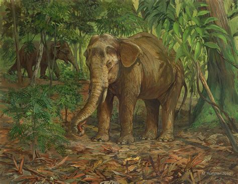 Borneo Pygmy Elephant Painting by ACE Coinage painting by ...