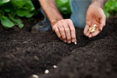 Image Gallery planting seeds