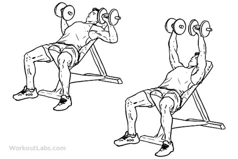 incline bench press dumbbells incline dumbbell bench press illustrated exercise guide