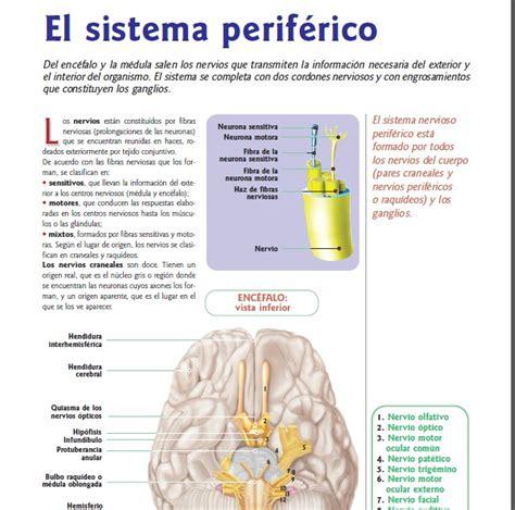 libros de anatomia y fisiologia del cuerpo humano pdf anatomia y fisiologia del cuerpo humano pdf bs 3 000 00 en mercado libre
