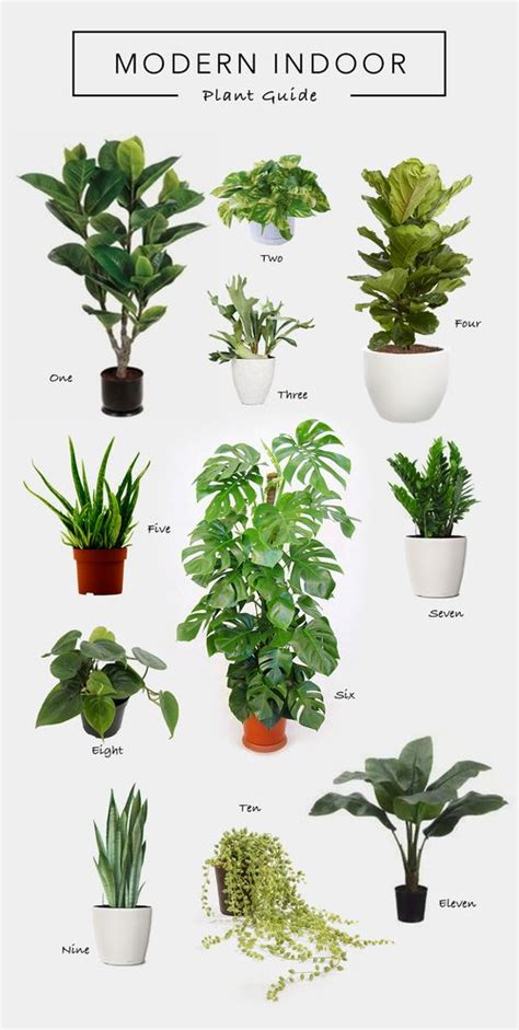best plants for dark rooms decorating with nature living room plants hanging plant