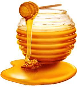 Madu Nutrisi Otak Tubuh Evobrain khasiat madu asli quot hi go brain quot madu nutrisi otak