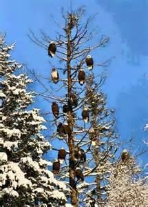 Lolsnaps com freedom tree