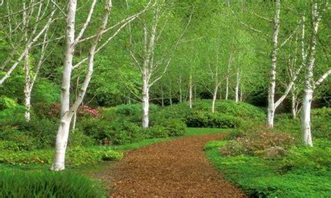 giardini verdi progetto casa giardino giardiniverdi