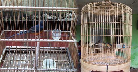 membuat sangkar burung tips membuat kandang sangkar ternak burung murai batu