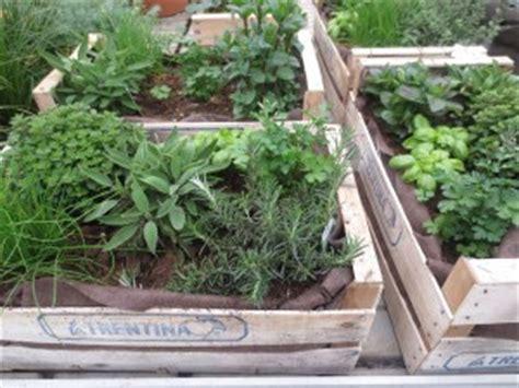 orto in cassetta orto in cassetta 5 cose devi sapere garden4us