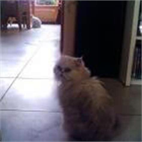 kat krabt aan behang help mijn kat krabt aan meubels deuren en of behang