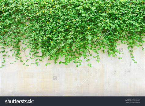 wall plant wall plant clipart clipground