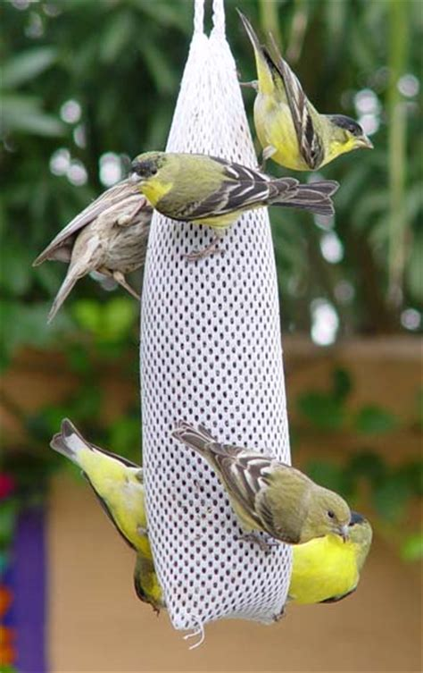 lure finches to your garden