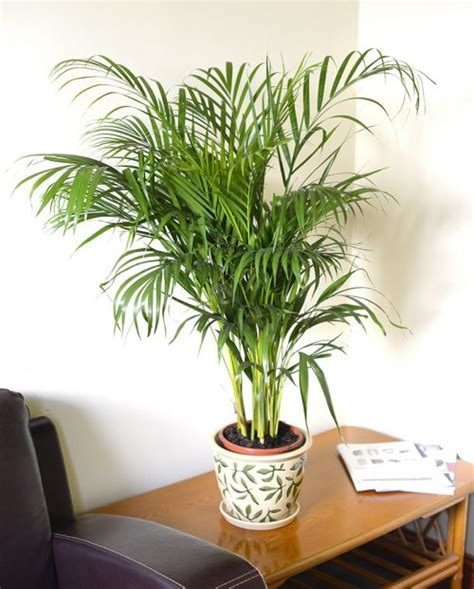 inside home plants indoor plants blooms productivity in business homes