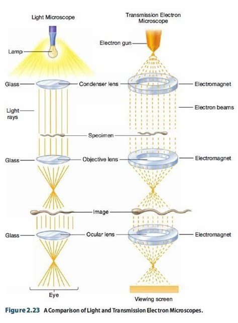 how does a light microscope work diagram of how a light microscope works images how to