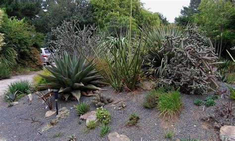 xeriscape design ideas gardening know how