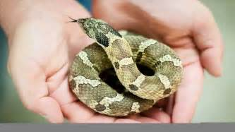 top 10 best pet snakes in the world 2013 youtube