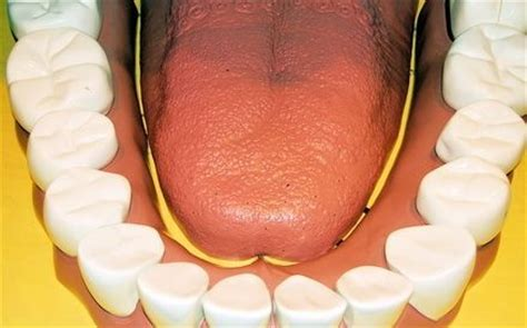 how to remove plaque from s teeth naturally how to remove plaque from teeth naturally