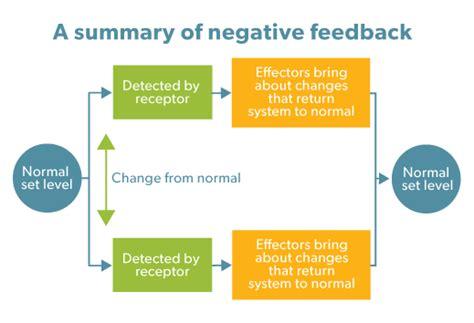 feedback diagram negative feedback homeostasis www imgkid the image
