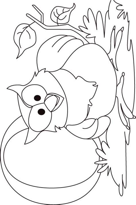 O The Owl Coloring Page by O For Owl Coloring Page For Free O For Owl