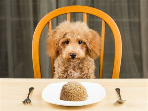 can dogs eat brown rice can dogs eat rice organic facts
