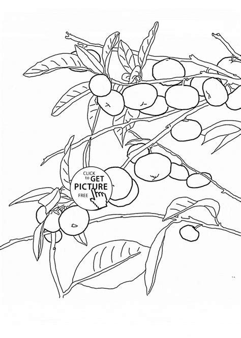 coloring page tree with fruit 17 best ideas about fruit coloring pages on pinterest