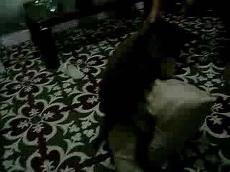 salas de sexo sexo expl 237 cito na sala de estar youtube