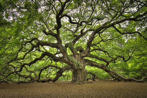 best selling photography oak v1 jpg macinnis photography johns